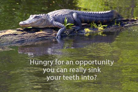HungryGator_1187S